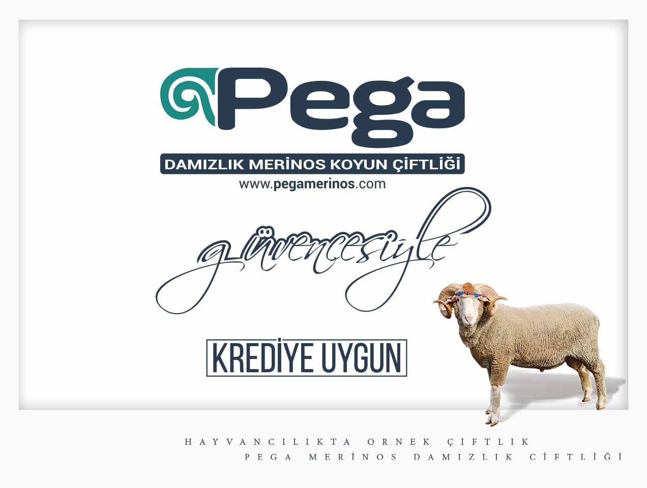 Pega-Krediye-Uygun