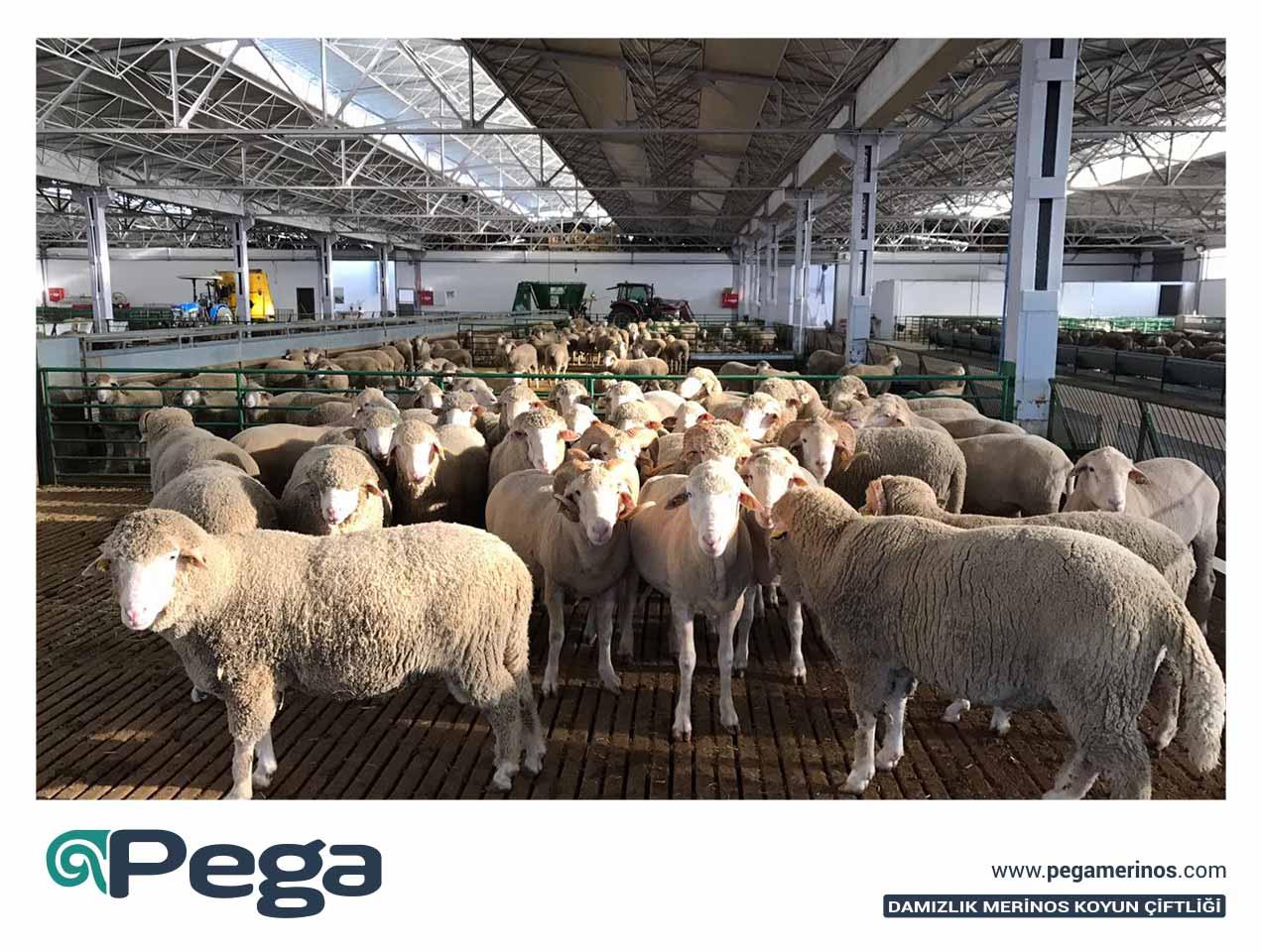 Pega01