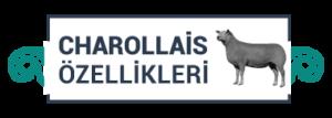 charollais-icon