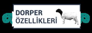 dorper-icon