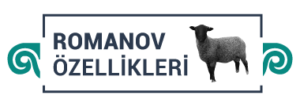 romanov-icon